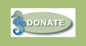 Donate to the Rudee Inlet Foundation | Virginia Beach