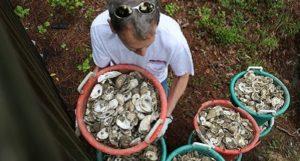 Oyster-Reef-Installation-RIF1